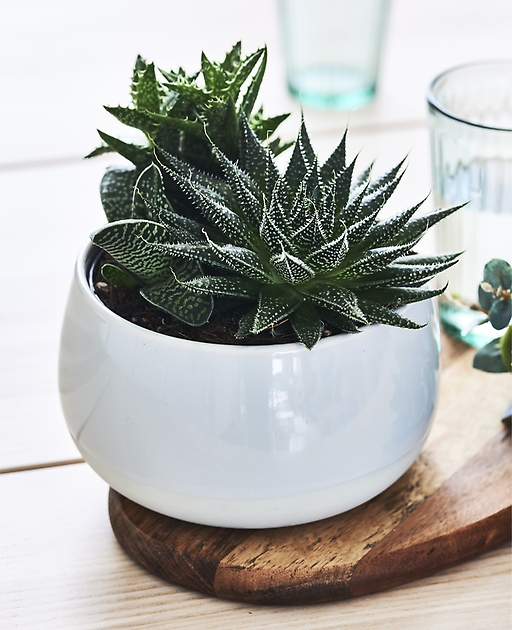 ikea-choose-easy-to-maintain-plants-like-succulents-to-decorate-table-settings__1364517879161-s31